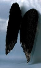 Picture of Feather Wings 22 Inches Black