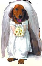 Picture of Bride Dog Costume