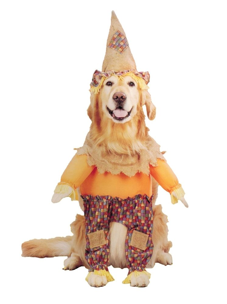 Picture of Lil' Scarecrow Pet Costume