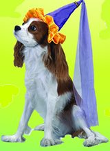 Picture of Lil Princess Pet Costume