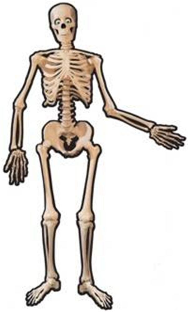 Picture of Skeleton Jointed Cut-Out