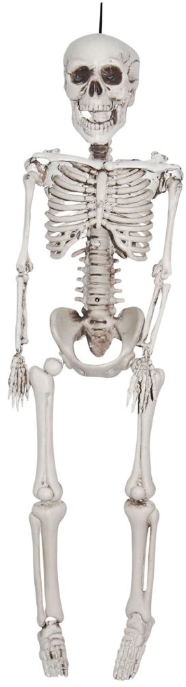 Picture of Realistic Plastic Skeleton 3ft