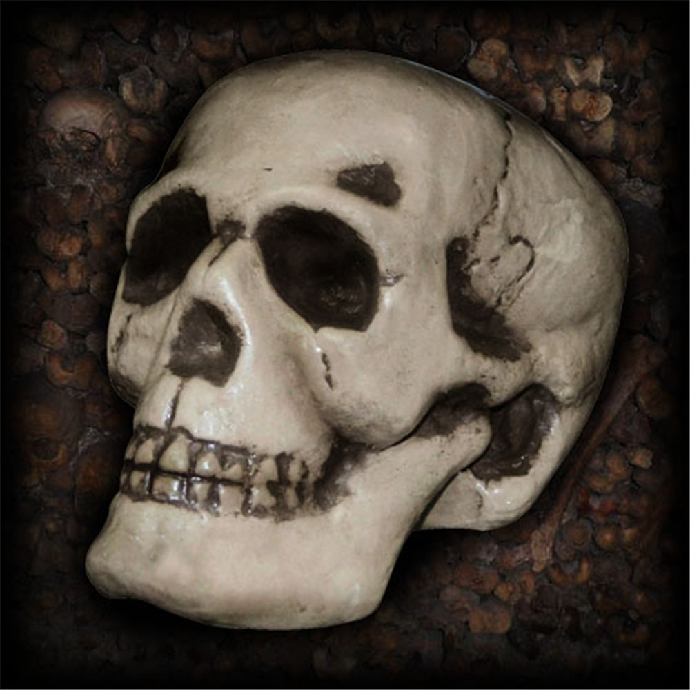 Picture of Realistic Skull