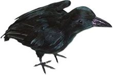 Picture of Realistic Large Crow
