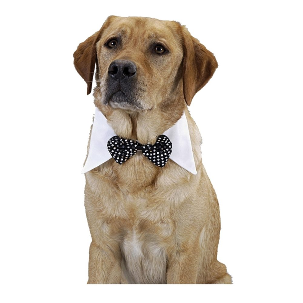 Picture of Black Bow Tie Pet Costume