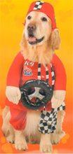 Picture of K-9 Race Team Pet Costume