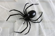Picture of Black Widow Spider 6in