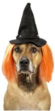 Picture of Wicked Witch Hat Pet Costume