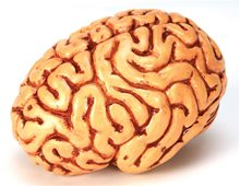 Picture of Brain Decor