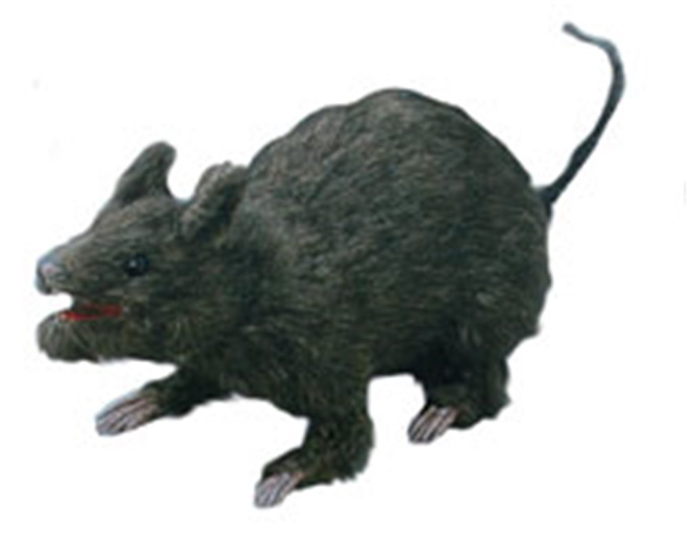 Picture of Realistic Attacking Rat