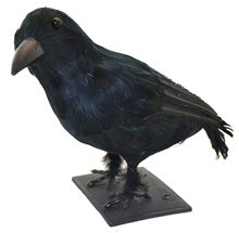 Picture of Realistic Sitting Crow Prop