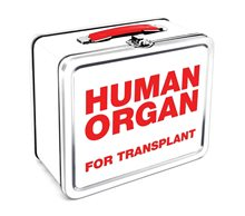 Picture of Human Organ Lunch Box