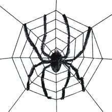 Picture of Spiderweb with Giant Spider