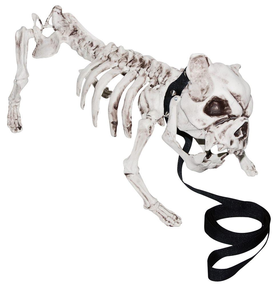 Picture of English Bulldog Skeleton Prop