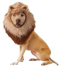 Picture of Roaring Lion Pet Costume