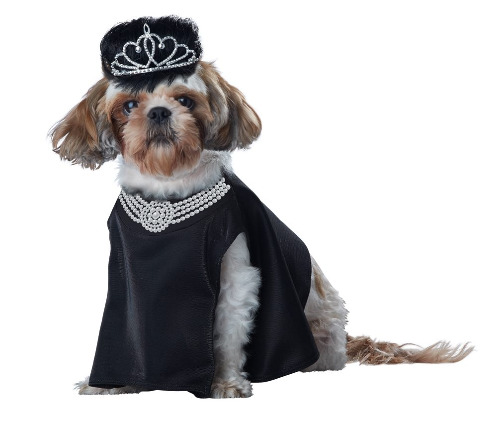 Picture of Barkfest at Sniffanys Pet Costume