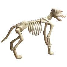 Picture of Large Skeleton Dog Prop