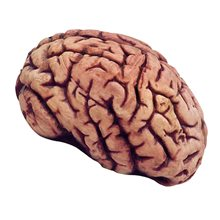 Picture of Bloody Brain