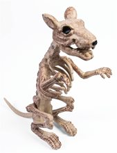 Picture of Sitting Rat Skeleton Prop