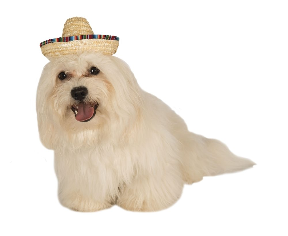 Picture of Straw Sombrero Pet Hat
