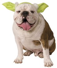 Picture of Star Wars Yoda Ears Dog Headband