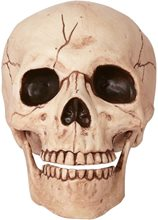 Picture of Life-Sized Human Skull Prop 6in