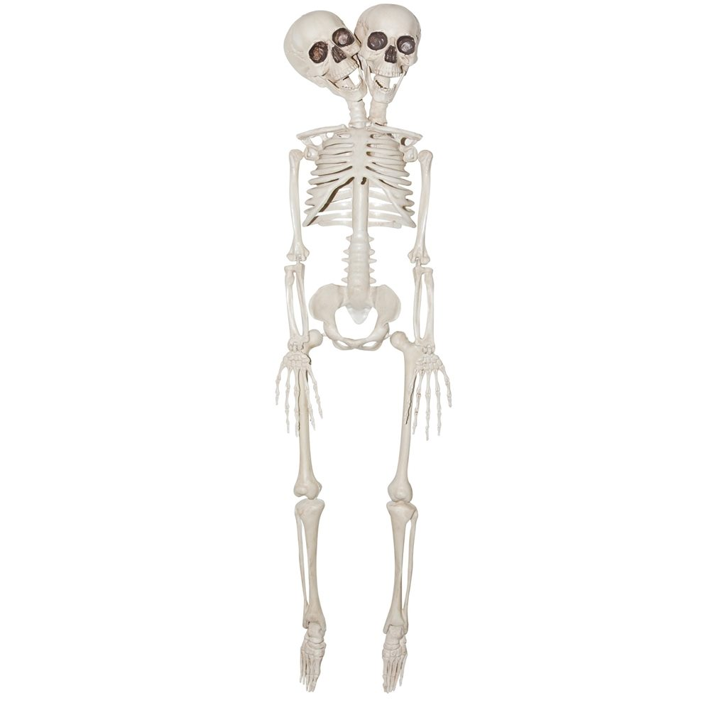 Picture of 2-Headed Plastic Skeleton Prop 20in