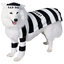 Picture of Prisoner Pooch Pet Costume (Coming Soon)
