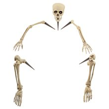 Picture of Life Sized Groundbreaker Skeleton