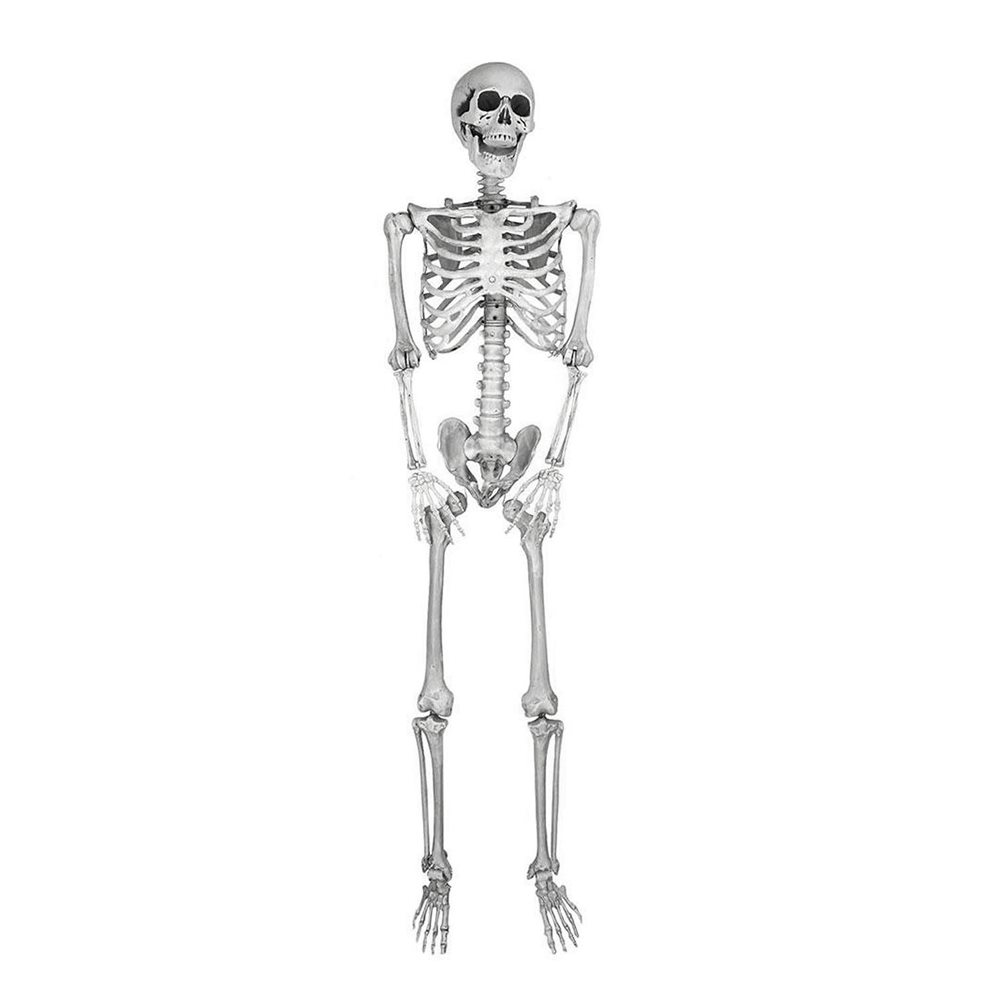 Picture of Hanging Skeleton 5ft