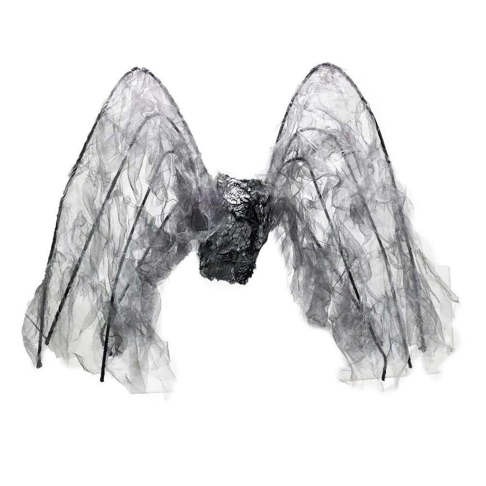 Picture of Black Wings